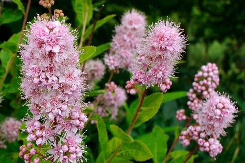 unkown wildflower