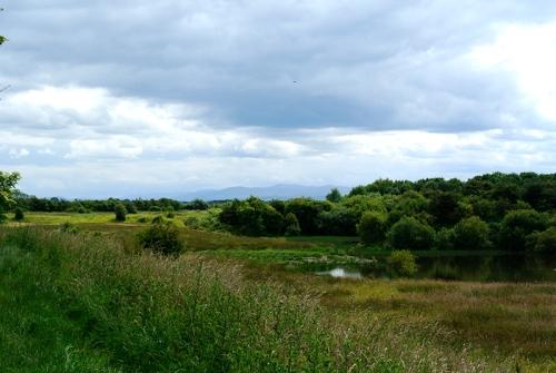 Longtown ponds