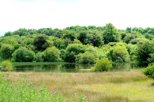 Longtown pond
