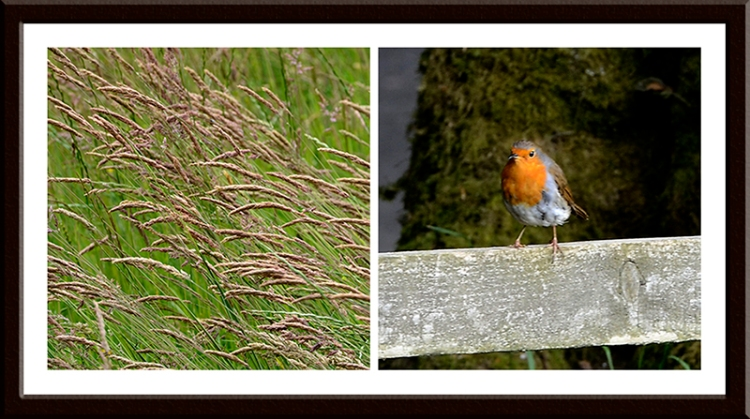 grass and robin