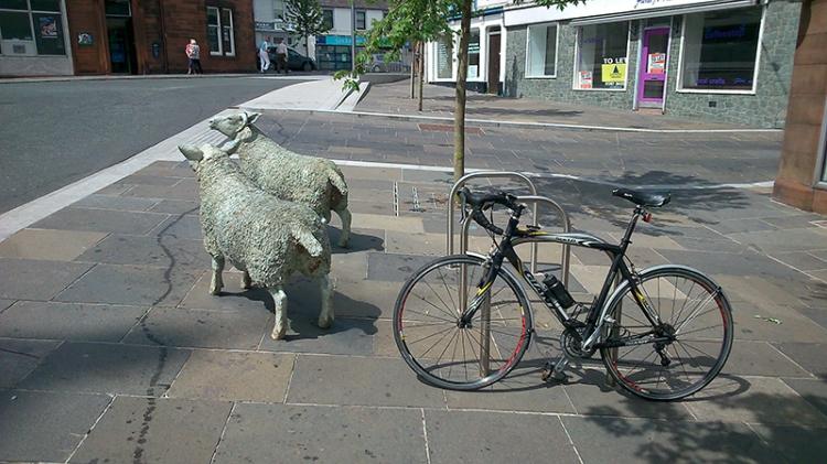 Lockerbie sheep