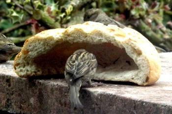 Bird and Bread