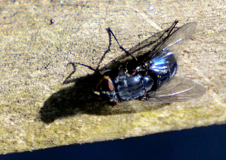 fly on gate