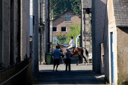 mounted followers