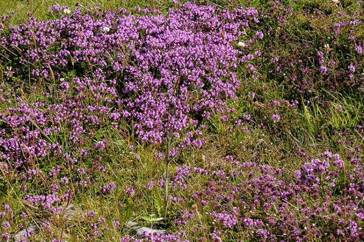 wild flowers on moor