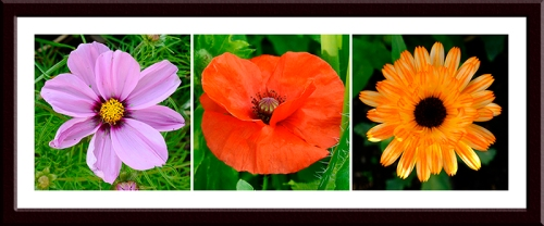 cosmos, poppy and marigold