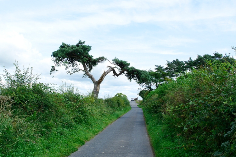 tree in hedge