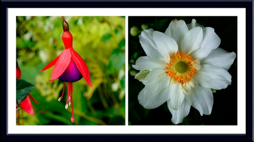 fuchsia and japanese anemone