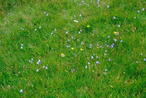 wild flowers at Glencorf burn