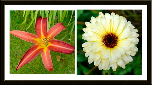 day lily and marigold