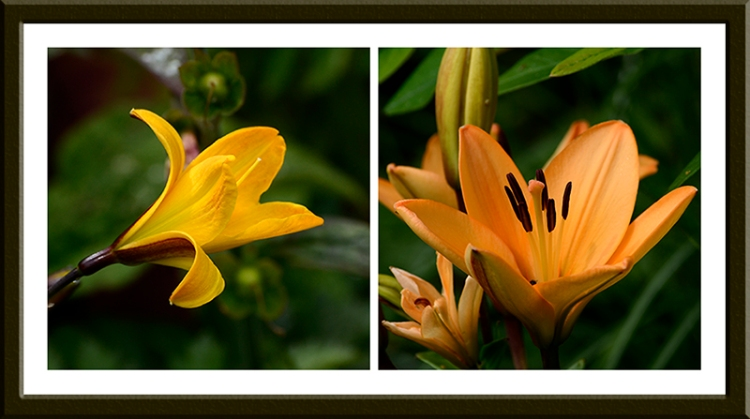 A day lily and a longer lasting variety.