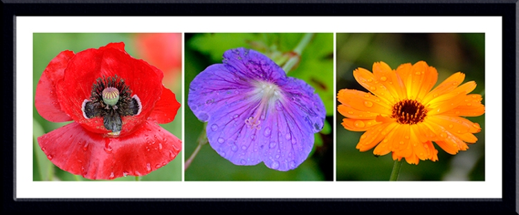 poppy, geranium, marigold
