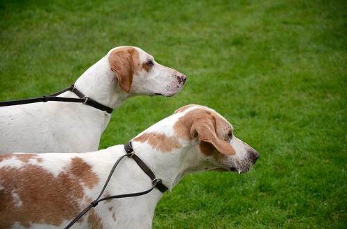hound show