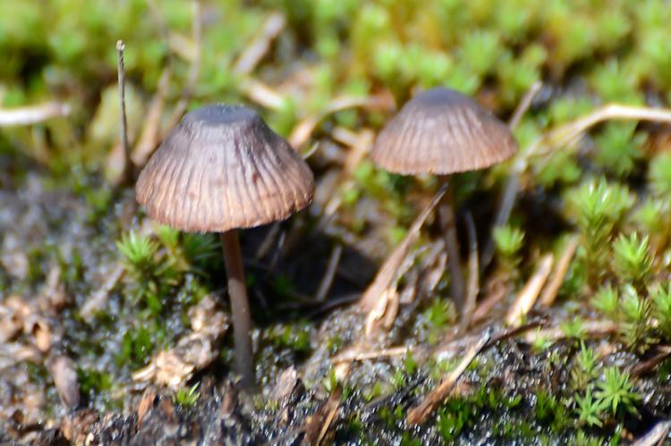 fungi on whita