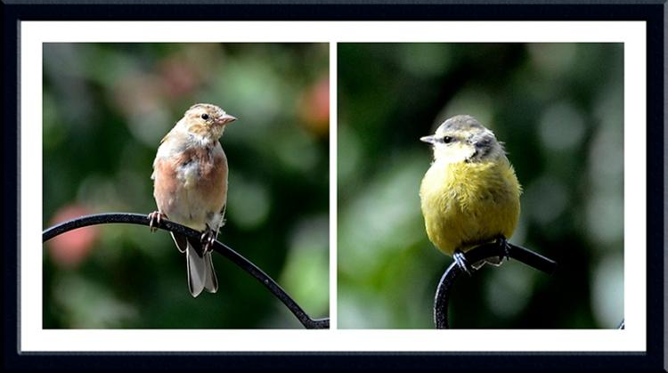 _DSC2047 perching birds
