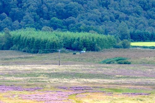 Moorland feeders