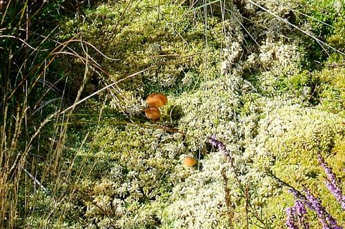 fungus in a bog
