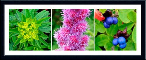 euphorbia, astilbe and tropaeolum