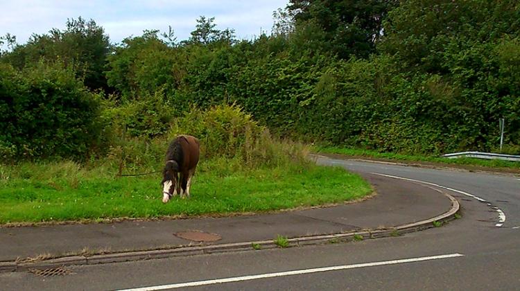 DSC_0012 roadside horse grazing