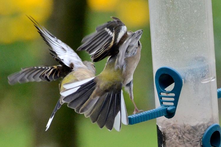 bad feeder behaviour