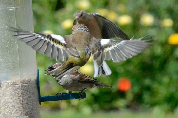 busy feeder (4)