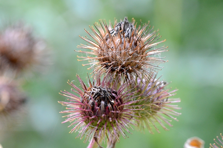 prickly thing