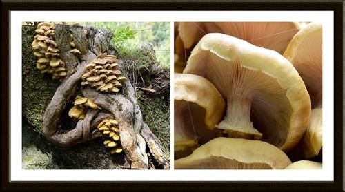 eskdale fungi