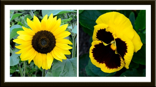 sunfliwer and pansy