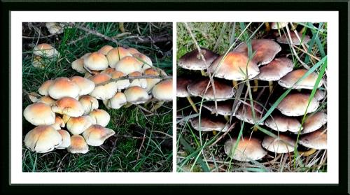 Broomholmshiels mushrooms