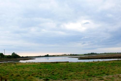 River Mite