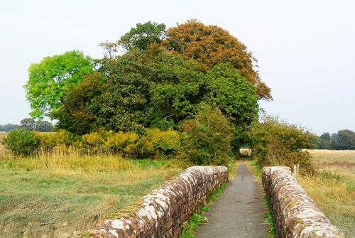 autumn trees at Annan
