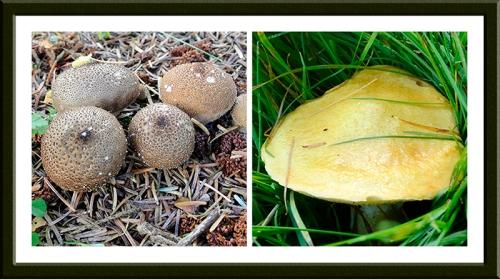 fungus at manure mine