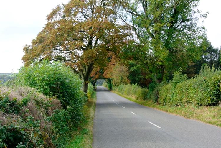 trees near Hoddom