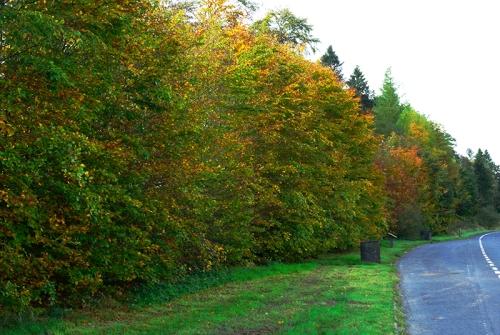 autumn on the A7