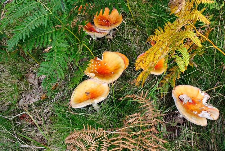 fungi at Bailliehill (5)