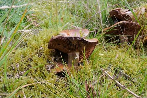 fungi at Bailliehill
