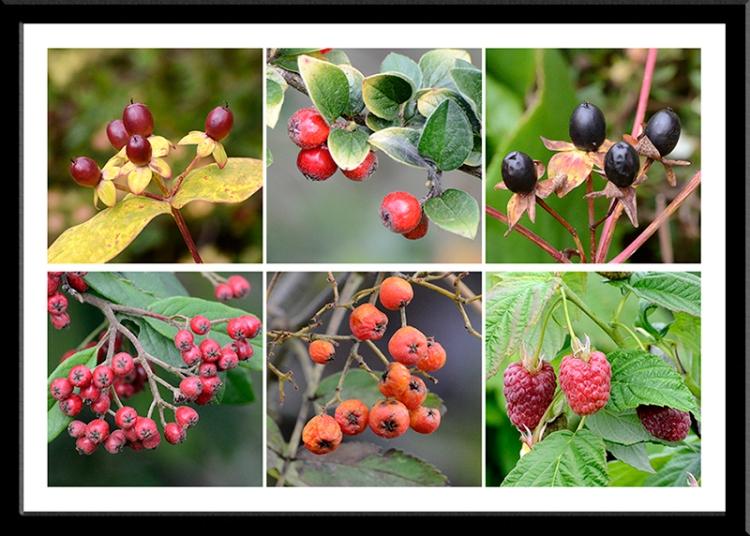 garden berries (2)
