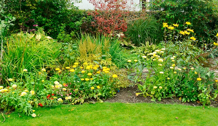 This particular set were planted put by my stepmother Patricia when she came to visit earlier in the year.