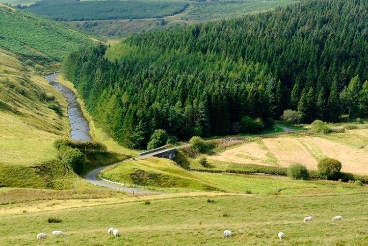 tanlawhill bridge (2)