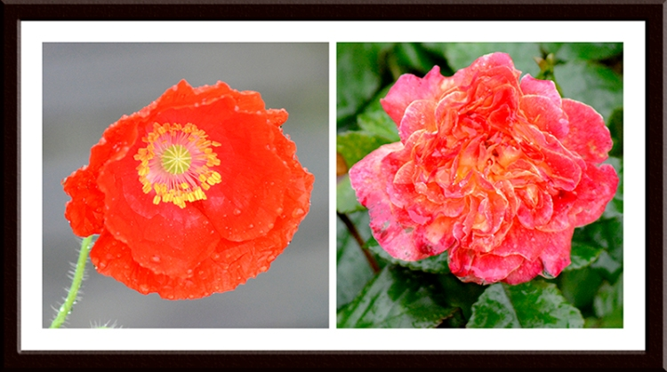 Rose and poppy