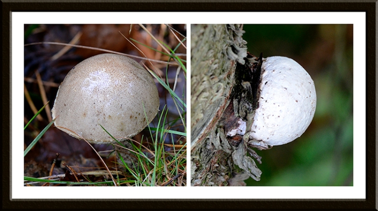 ...and interesting growths to keep an eye out for