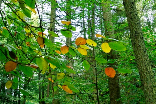 leaves on beechy plain