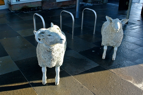 Lockerbie sheep