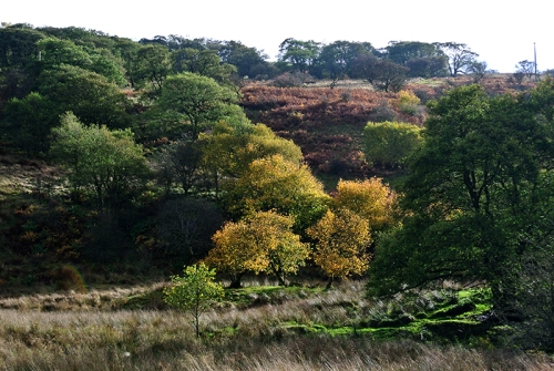 autumn colour up wauchope
