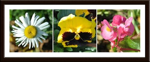 daisy, pansy and petunia