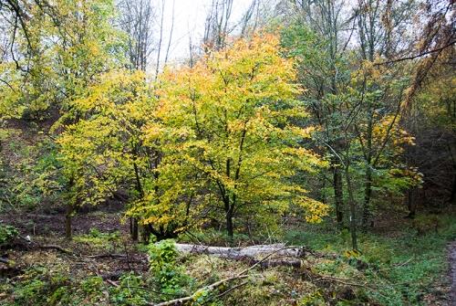Eastons Walk tree