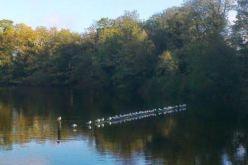 The seagulls do like to line up neatly