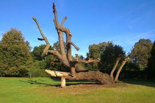 tree in regent's Park
