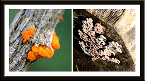 fungus Caerlaverock nature reserve