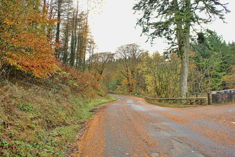 leaves on road